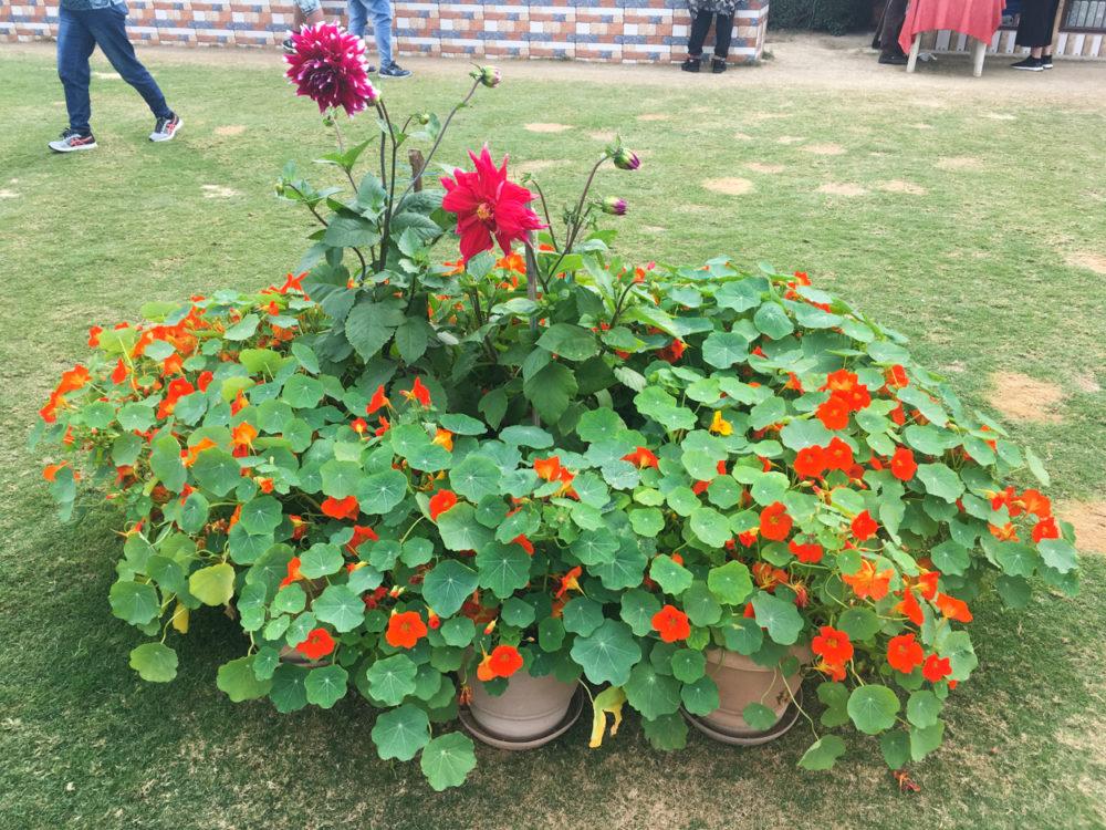 Zápisky z Indie: Fatehpur Sikrí